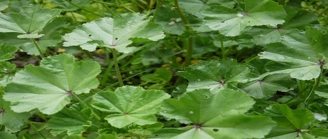 herb for blog copy