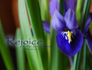 Rejoice Green and purple