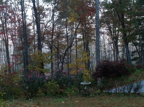 Foggy Fall