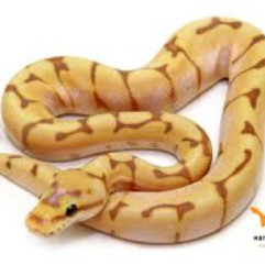 Just a Snake