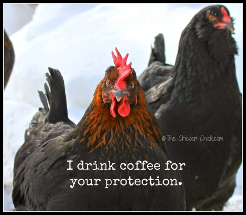 Chicken and coffee 1