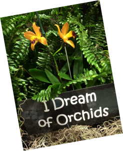 I Dream of Orchids