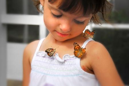 Kayla butterflies