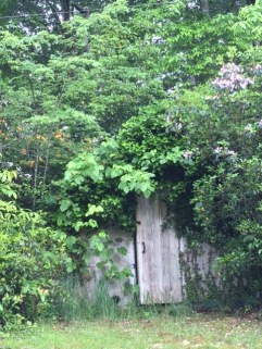 Old door with bushes
