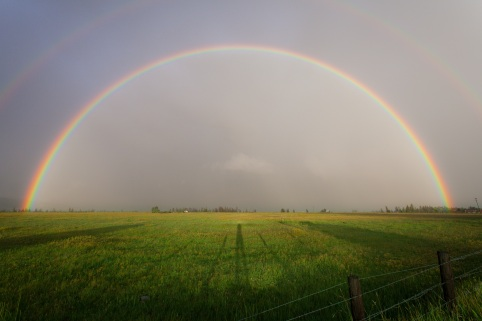 Rainbow over grass