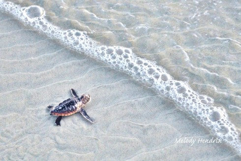 turtle vs sea-L