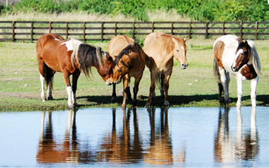 4-horses-by-water