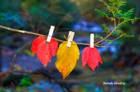 florida-fall-leaves-copy