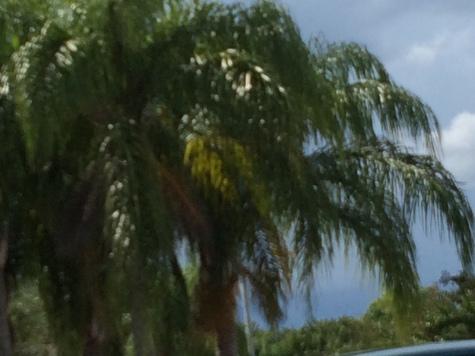 storm-clouds-palm-trees-copy