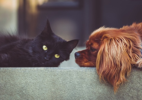 cat-dog-stare-down