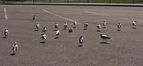 bird-parking-lot