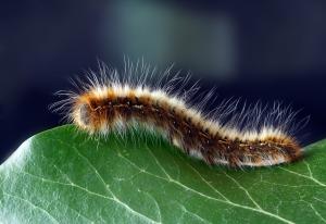 e3fc05ea42f60 Are You a Pillar or a Caterpillar