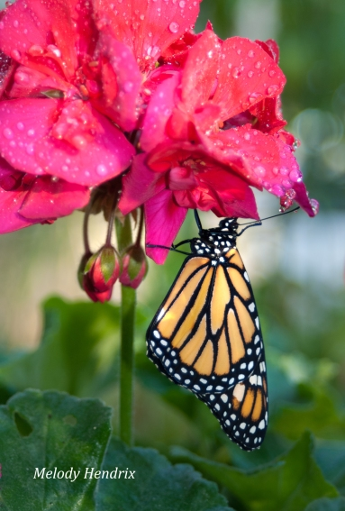 Creating a Florida Butterfly Garden | Old Things R New